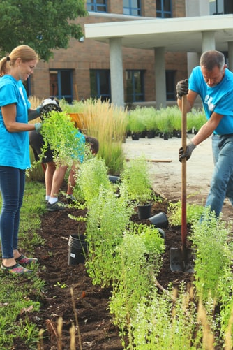 People replanting plants in an outdoor flowerbed
