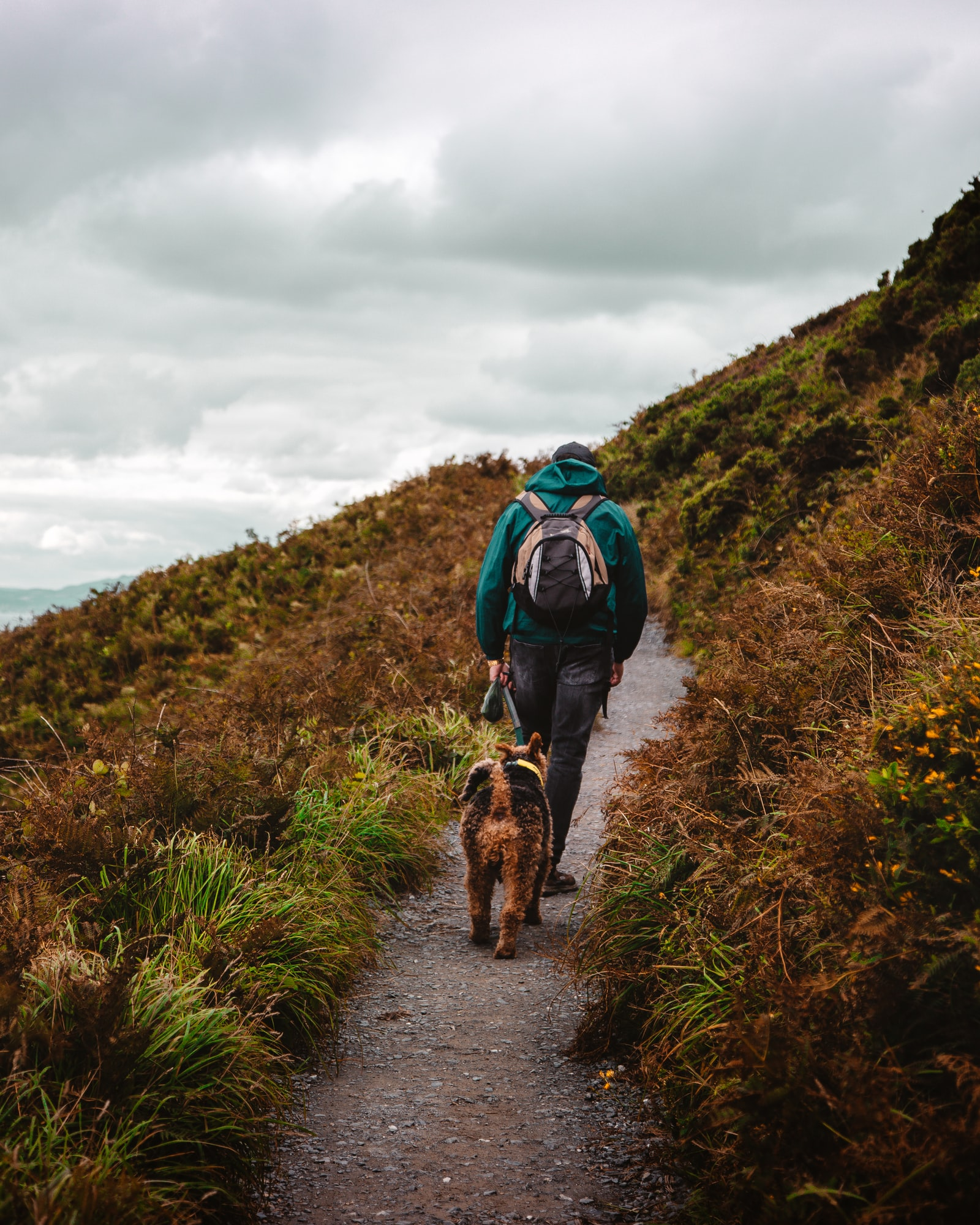 A hiker walking with a dog